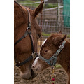 safe haven horse rescue cottonwood california