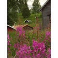 flowers huts sweden