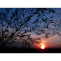 nature series macro focus grass sunset colours soft shape shadow keitology