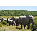 vacation africa addo elephant