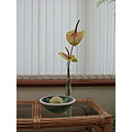 plant anthurium blinds