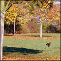 autumn trees park dog