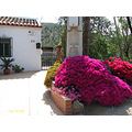 home house garden Andalucia Spain flowers country landscape