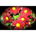 flowers red yellow daisy beauty