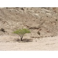 Namibian Desert After we drove 380 km / 600 miles this was the first green plant we found
