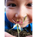 kid child family leaping spider orchid flower plant