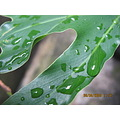 rain water leaves leaf nature