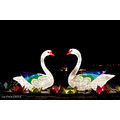 swans china lights Emmen Zoo Valentines day