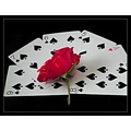 Cards roses