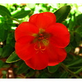flower red green light