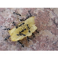 Insects Ants Macro