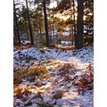 forrest trees snow light