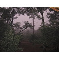 fog tree woods tapalpa purple