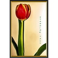flower red tulip