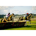 Horse jumping race steeple chase hunt