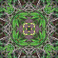 fern leaf wood forest nature mandala