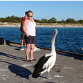 bird liz pelican stare down perth littleollie
