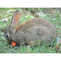 animals nature rabbit