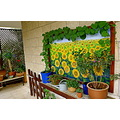 plants painting garden hallo