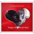 valentine cat greeting