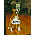 chicofph chico downtown pet pets petshop closedfph