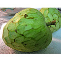 Chirimoya custard_apple fruit Andalucia Spain