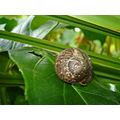 Nature Gillards Macro Greenery Snail Slug Shell Leaf Leaves