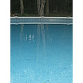 Reflection of trees in pool