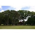 Marae Waitangi NZ trees sky nature grass summer sun clouds