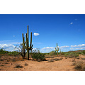 scenery landscape nature usa arizona plant