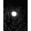 * moon on an icy tree
