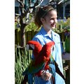 seaworld orlando florida birds parrot parrots girl woman