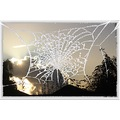 Cobweb winter