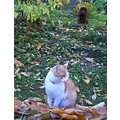 cat pet animals max autumn dog