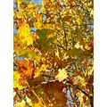 Autumn�s Mystery  The falling leaves � shrouded in history Caught up in the swirling mists of ...