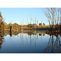 reflectionthursday calm morning farm dam perth hills littleollie