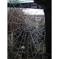 webs spiders frost