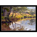 wales woods autumn tree river serene peace snowdonia reflection