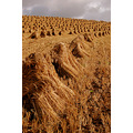 barley stooks coldridge devon
