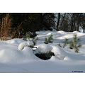 landscape winter snow stvitalpark winnipeg canada