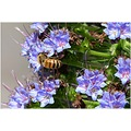 bee insect flower garden nature
