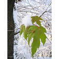 leaves november compfrozen complucky