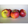 apple apples fruit stilllife autumn fall studio