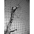 chainlink fence bw blackwhite tree