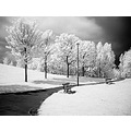 infra red black and white parks