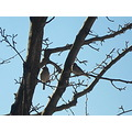 week 4 birds in a tree deep shadows faint light slight lighting