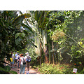 Hot Cornwall Eden Project Zone Plant Tropical Plants MMVI