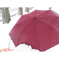 Iran karaj nature snow umbrella
