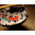 puppy kenzo in his bed