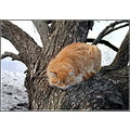 cat sleep tree animal